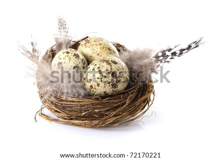 Birds nest with eggs on a white background. - stock photo