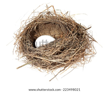 Birds nest with eggs on the white background. (isolated). - stock photo