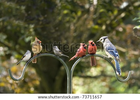 Birds of different feathers flocking together. A metaphor for diversity. - stock photo