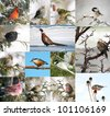 Birds of North America in winter collage. - stock photo