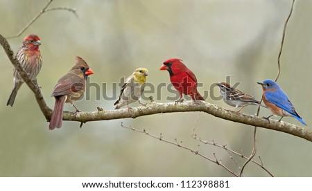 Birds of the Neighborhood - stock photo