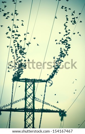 Birds on a high power wires which flying together create a wonderful illusion of disintegration wires