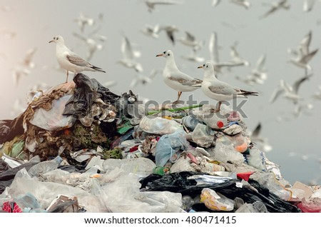 Birds on a landfill garbage