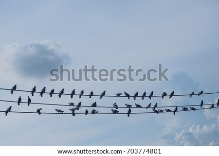 birds on a wire against a blue sky with clouds