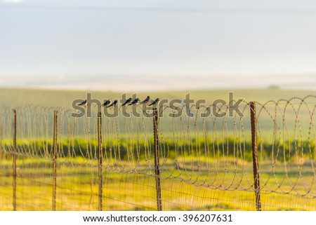 Birds on barbed wire fence - stock photo