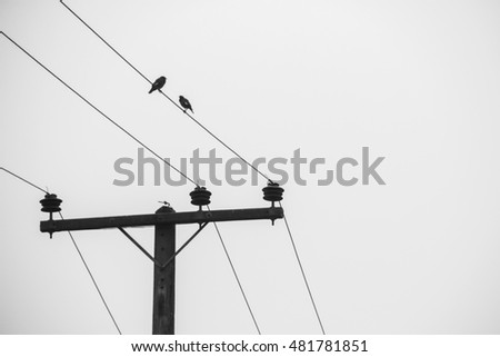 birds on cable in the morning