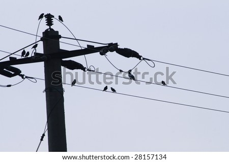 Birds on electrical wires against blue cloudless sky - stock photo