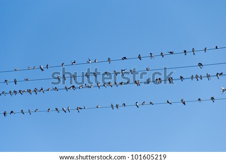 birds on high voltage cables - stock photo