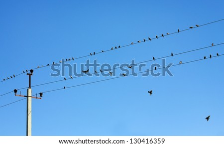 Birds on high voltage wires - stock photo