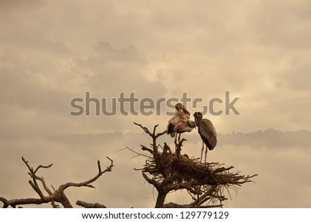 birds on nest - stock photo
