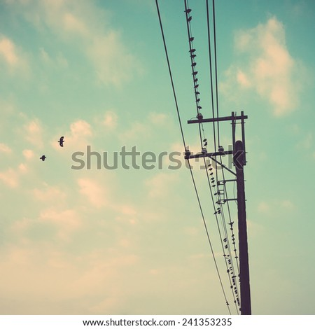 birds on power line cable against blue sky with clouds background vintage retro - stock photo