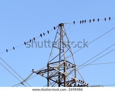 Birds on power line on blue sky background - stock photo