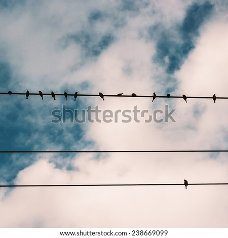birds on power line wires against blue sky with clouds background vintage retro instagram filter - stock photo