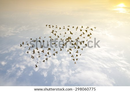 Birds on sky , growth development concept  vision leadership retro style spring time healthy imagination concept  business success winner art abstract friendship relationship leadership friends peak - stock photo