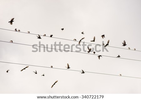 Birds on the wire  of electricity - stock photo