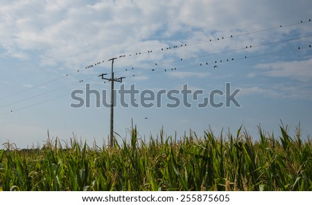 birds on the wires with the sky as background - stock photo