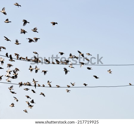 birds on wire against sky - stock photo