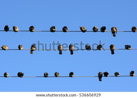 Birds on wire. Clear blue sky on background. Room for text horizontal image.
