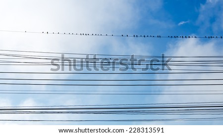 birds on wires over blue sky with clouds background - stock photo