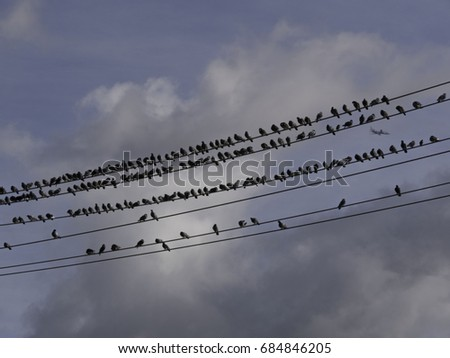birds on wires with airplane in background