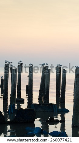 Birds On wood at sea looking for fish and resting. Shoot on sunset.