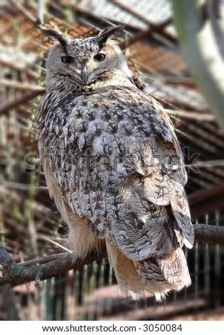 birds; prey; wings; feathers; beak; eye; hunting - stock photo