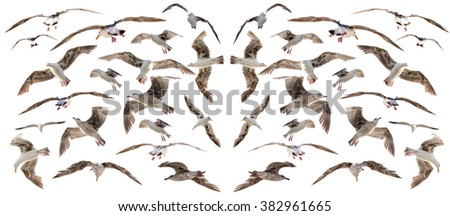 birds set isolated - stock photo