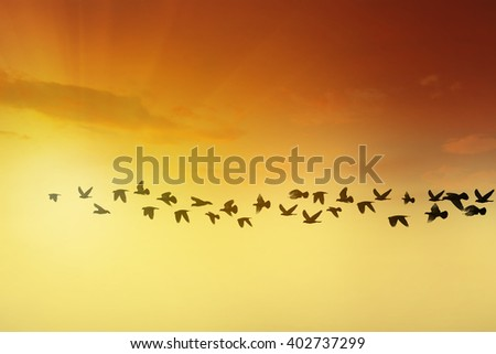 Birds silhouettes flying at sunset sky, go home concept