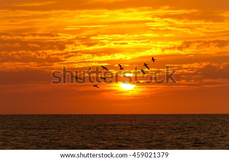 Birds silhouettes is a flock of large seabirds flying against a brilliant orange vivid sunset cloudscape sky. - stock photo