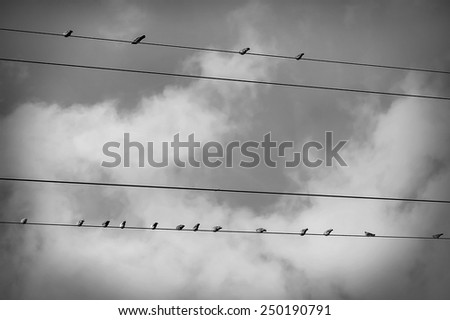 Birds sitting on a wire against the sky, black - white - stock photo