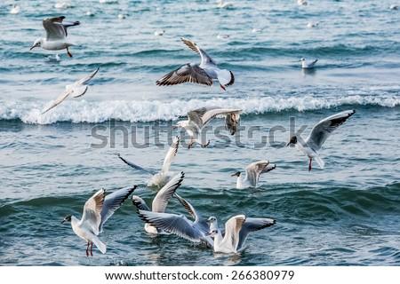 birds swans sea gulls  water swan  sky wild - stock photo