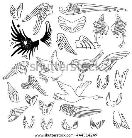 Birds & wings set linear silhouette isolated on background - stock photo