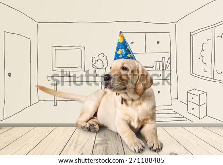 Birthday, adorable, golden. - stock photo