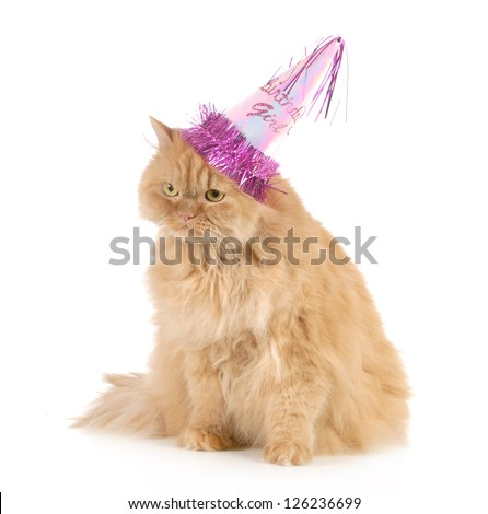 birthday cat wearing party hat isolated on white background - stock photo