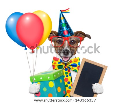 birthday dog with balloons and a big present - stock photo