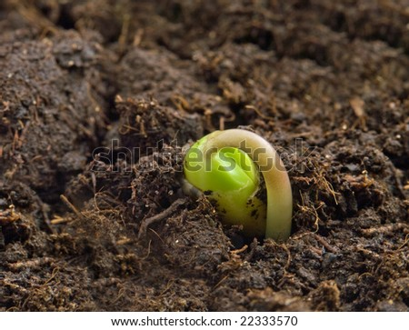 Birthday of a small plant - stock photo