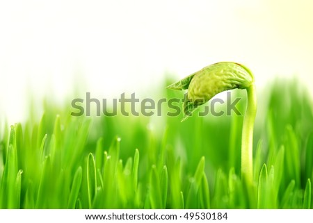 Birthday of a small plant in Sunshine - stock photo