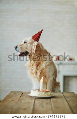 Birthday of dog - stock photo