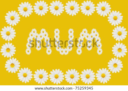 Birthday or Mother's Day card to Mum with daisies isolated on a plain background - stock photo