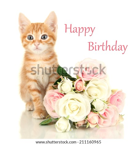 Birthday postcard. Cute little red kitten with roses isolated on white - stock photo