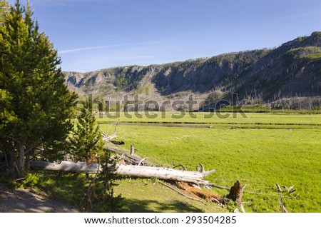 bison in Yellowstone National Park in Wyoming - stock photo