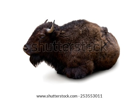 Bison on white background - stock photo