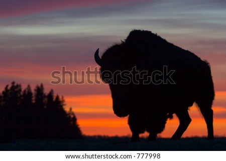 Bison Silhouette - stock photo
