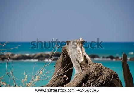 Bit of wood at Puako beach, Big Island, Hawaii - stock photo
