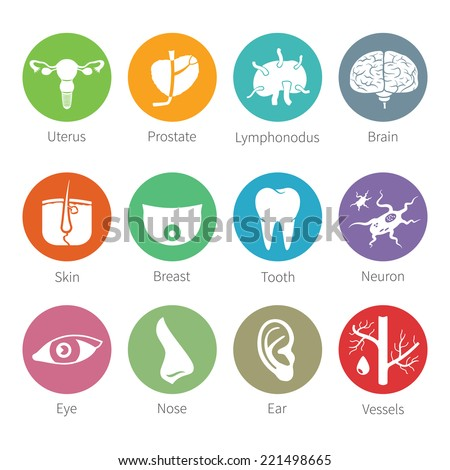 Bitmap icon set of human internal and external organs like uterus prostate brain skin breast tooth eye neuron nose ear blood vessel and lymphonodus in flat style - stock photo
