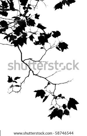 Black abstract leaves over white - stock photo