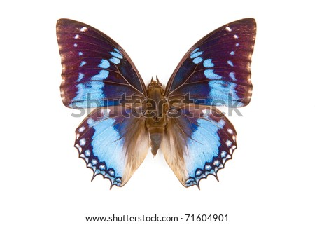 Black and blue butterfly Charaxes smaragdalis isolated on white background - stock photo