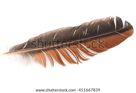 black and brown feather on white background