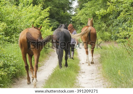 black and brown horses goes at the green forest on fresh grass