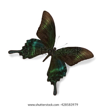 Black and green butterfly isolated on white - stock photo
